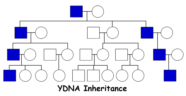 YDNA1