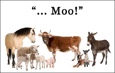 Group Of Farm Animals : Cow, Sheep, Horse, Donkey, Chicken, Lamb