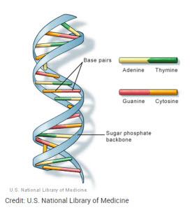 DNA.def
