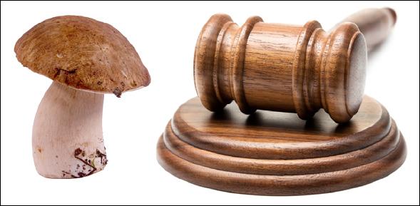 mushroom laws