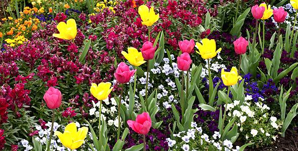 Alabama spring flowers