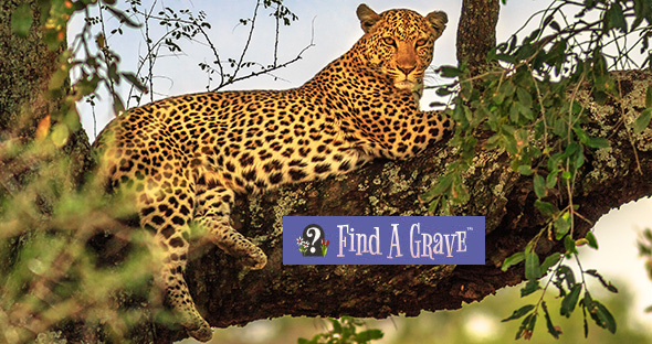 Find A Grave leopard
